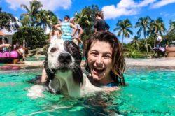 moda piscinas obra perros